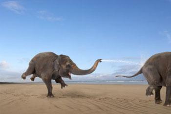 веселые слоны