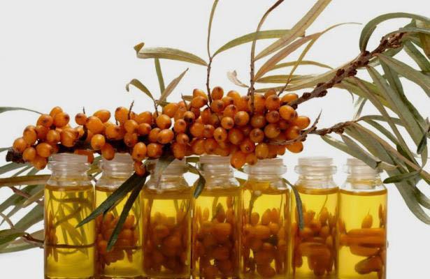 Облепиховое масло в домашних условиях