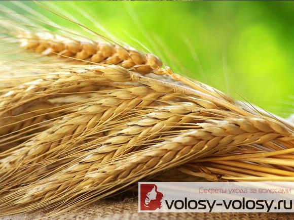 Витамин е для сухих кончиков волос