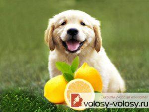 Осветление волос лимоном. Как осветлить волосы лимоном?
